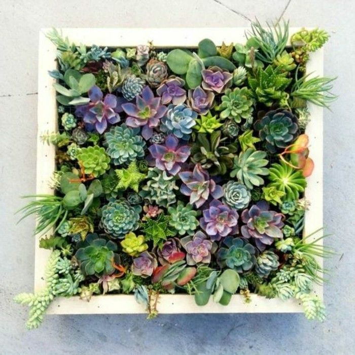 Picture Frame itself-build fill-with-real-plant