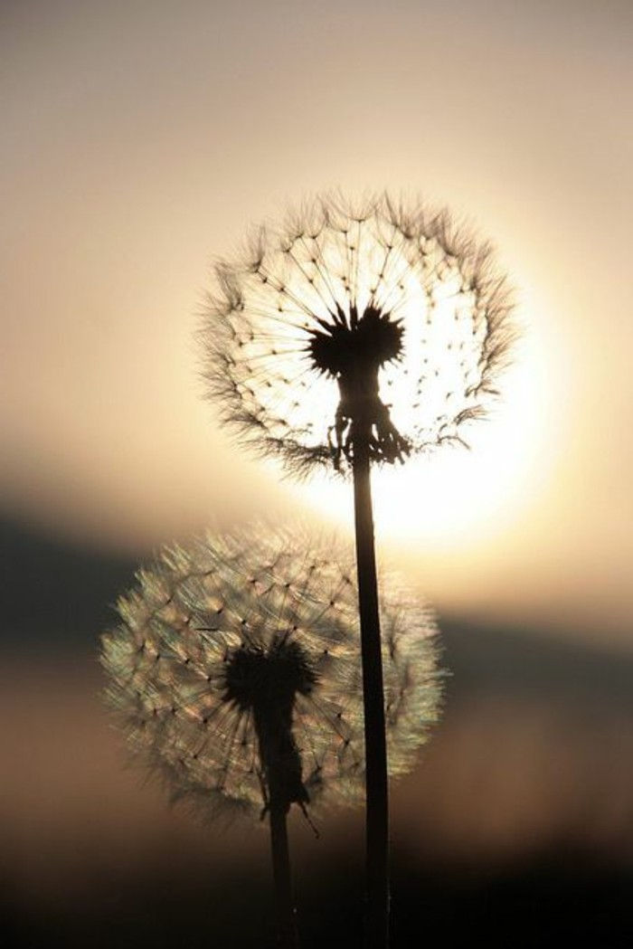 Dandelion Pictures-the-sun-by-look