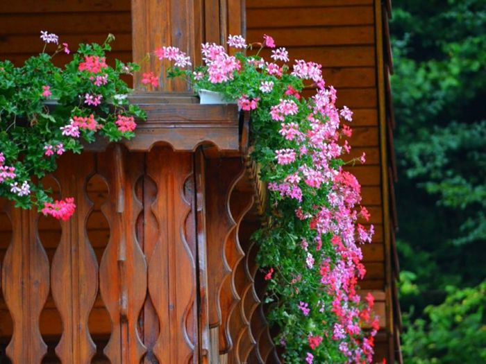 balcony-flowers-pink-lovely-color