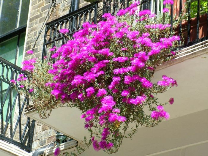balcony-flowers-super-interesting-color
