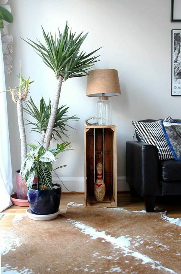 house plant-yucca-plant-garden plants-palms-deco-by-the-garden