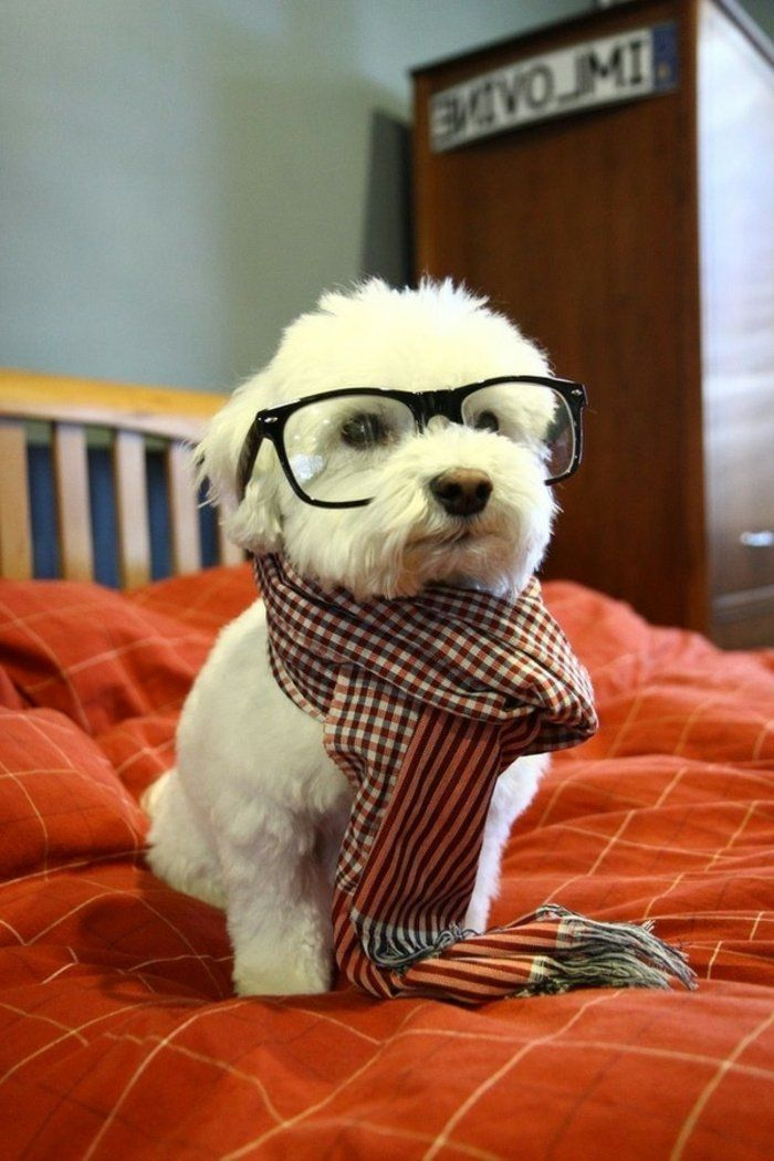 small-dog hipster glasses Plaid Neckerchief sweet and flirtatious