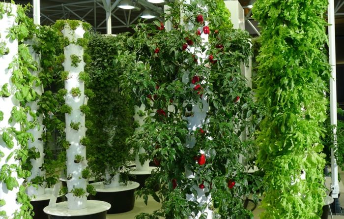 vertical garden with useful plants that look very nice at the same time