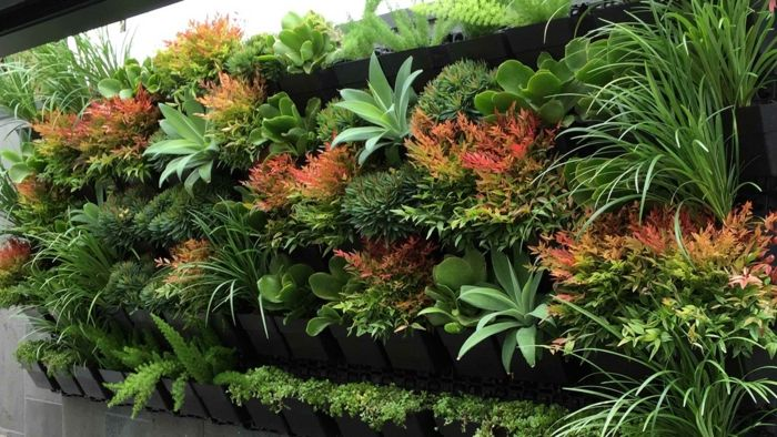 Vertical garden with exotic plant species in several different colors
