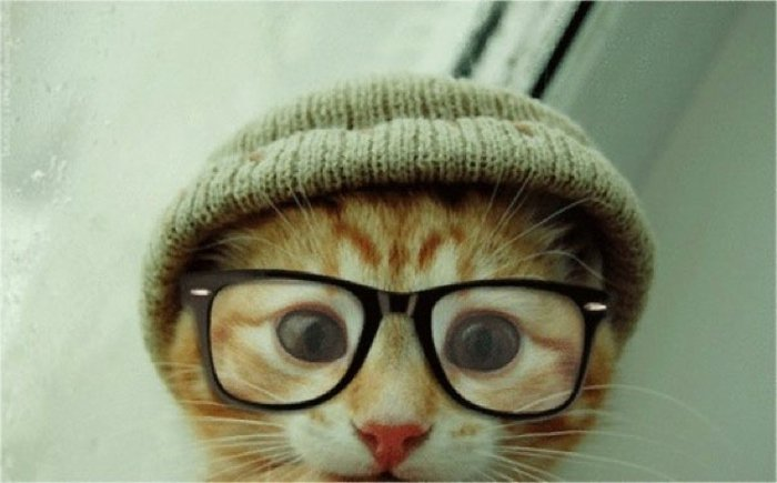 Sweet Kitten hornbrille-knitted hat-hipster-style funny photo