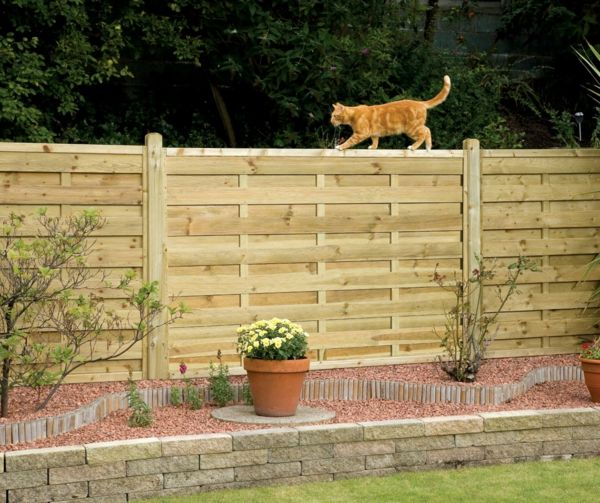 View fence garden cat and plants