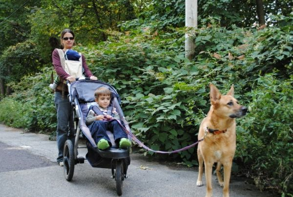 walk-with-prams and-dog-very-funny-photo