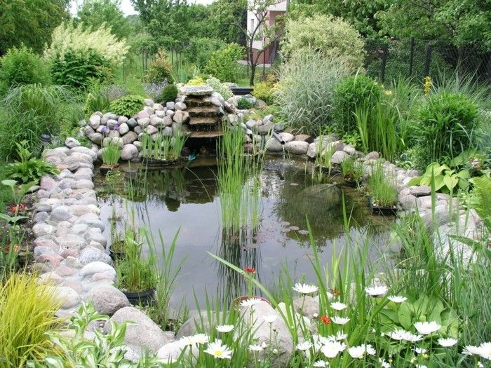 pond-plant-the-pond-bephlanzen-and-the-garden-beautify