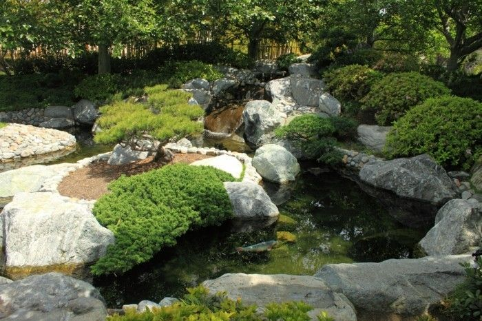 pond-plant-a-great-pond design