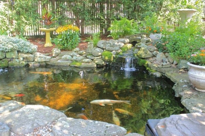 pond-plant-fish-by-pond