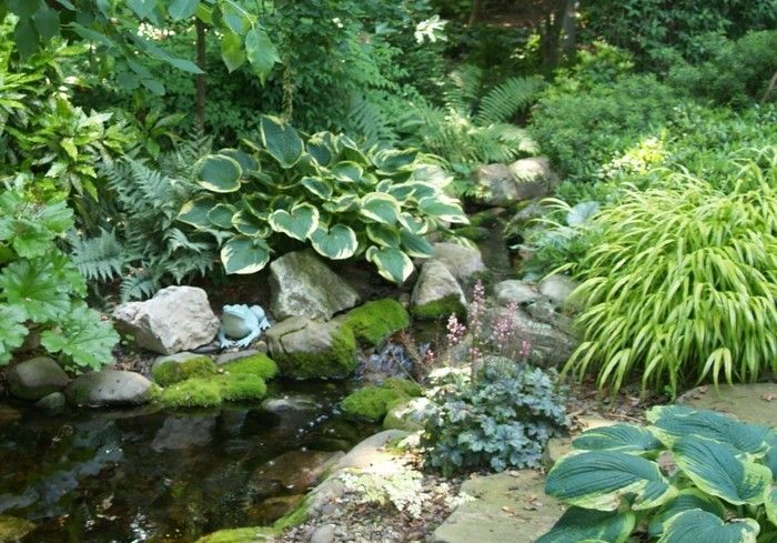 pond-plant-here-are-wonderful-plant-to-the-pond