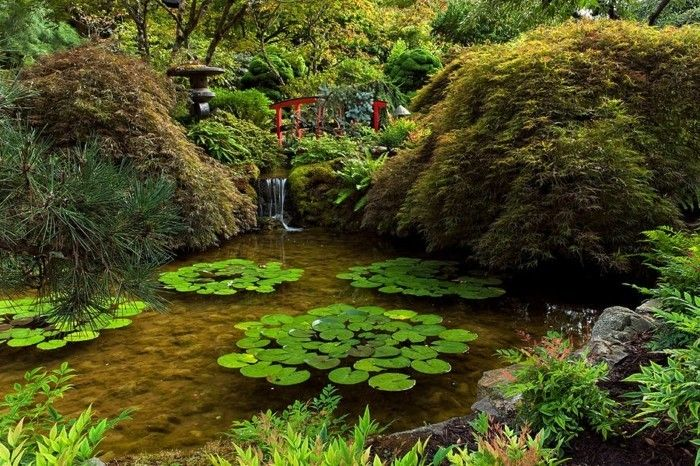 pond-plant-good-idea-of-a-garden design-with-pond