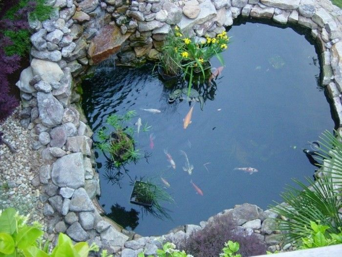 pond-plant-beautiful-fish-in-pond