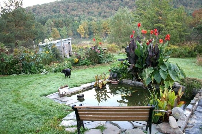 pond-planting-nice-looking-plant-in-pond