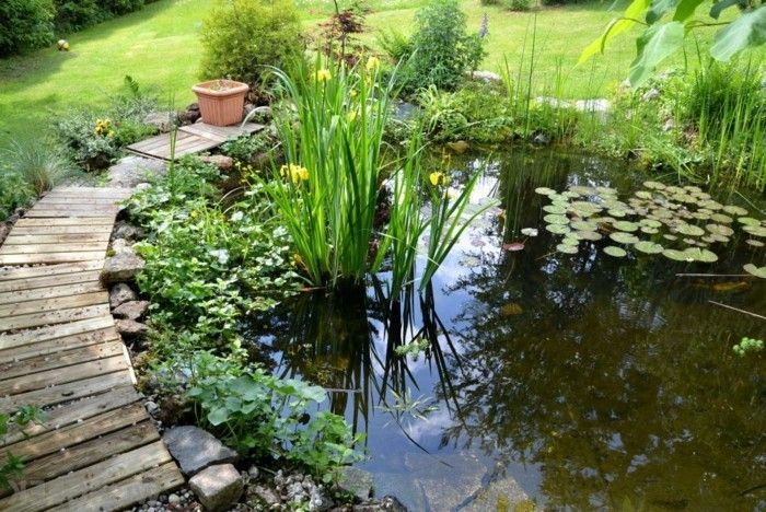pond-plant-great-plant-on-pond