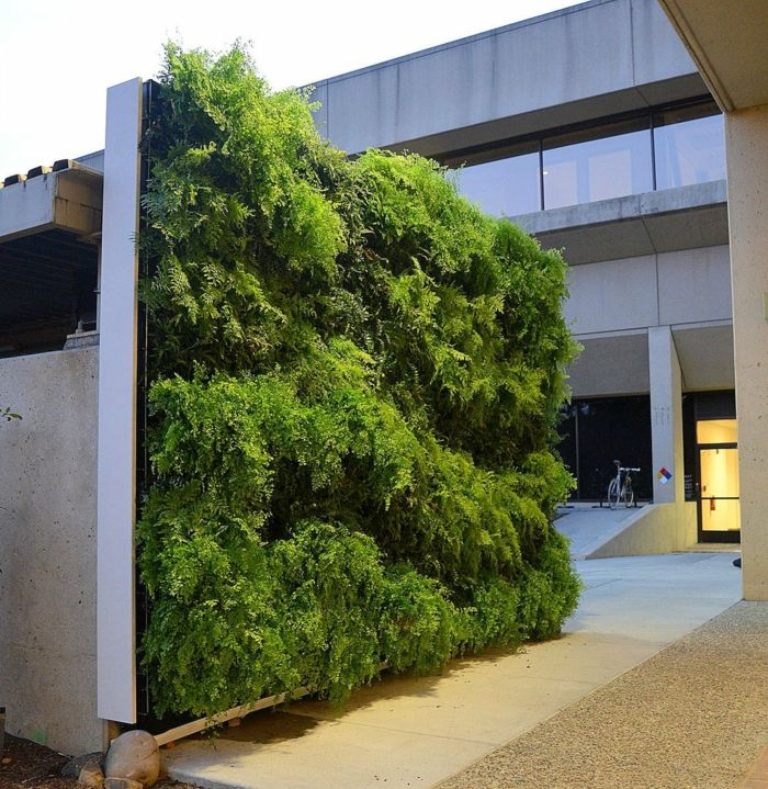 vertical plants in the courtyard - a whole green wall