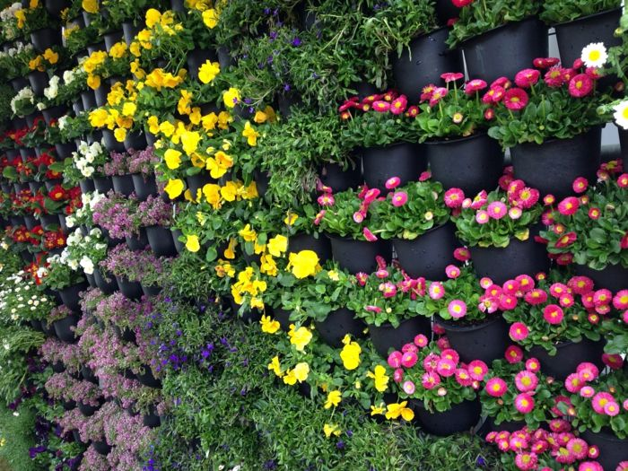 colorful flowers in a special wall for vertical plants - so beautiful