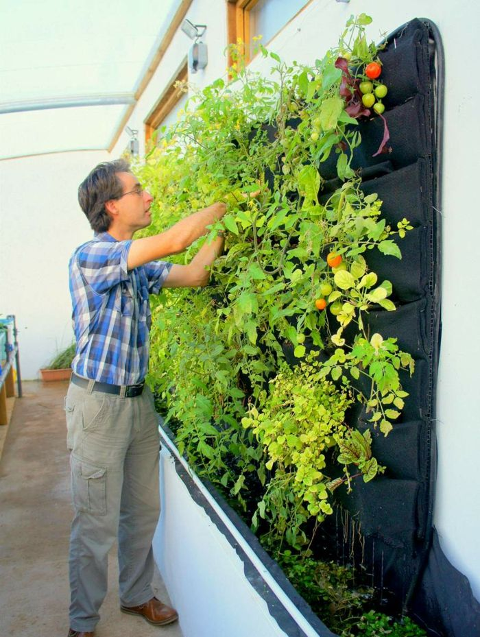 how useful vertical plants - tomatoes and peppers