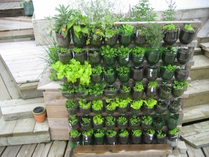 Build the plant wall yourself - DIY project with bottles - easy to water
