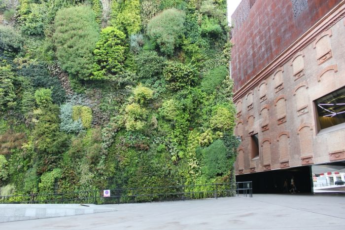 vertical greenery looks nicely next to the bare walls of other buildings