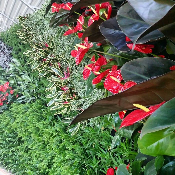 red flowers with large leaves and ornamental bushes - build planting wall yourself