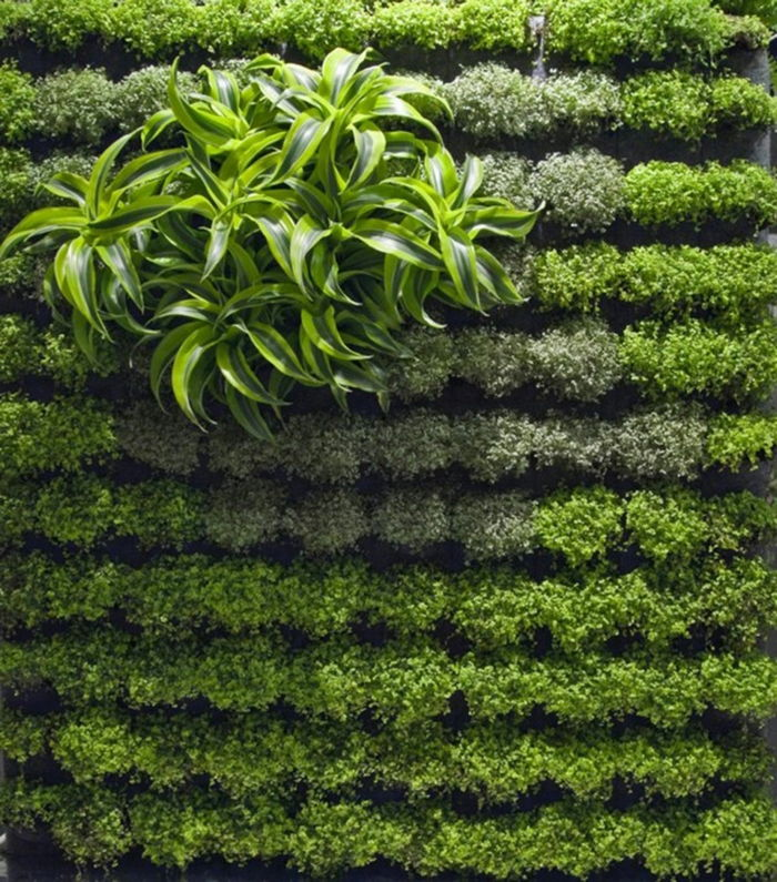 build an accent of decorative plants - plant wall itself