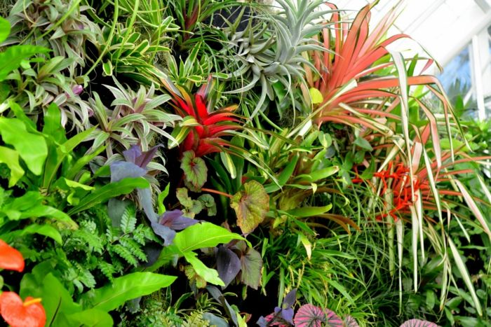 vertical garden with red and blue exotic plants with variety of leaves