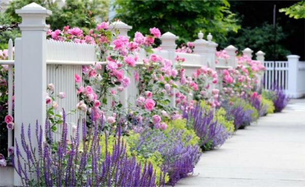 white-fence-and-many-flowers-pink and purple