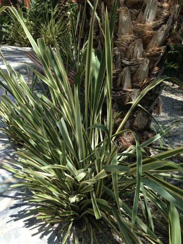 wonderful-plant-yucca-plant-garden plants-palms-deco-by-the-garden