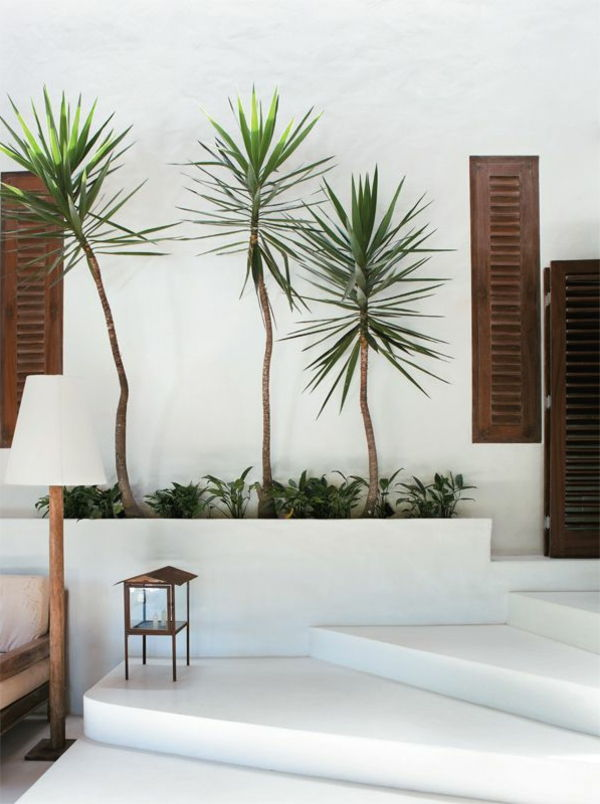 -yucca-palms-beautiful-plant-by-inside-and-outside
