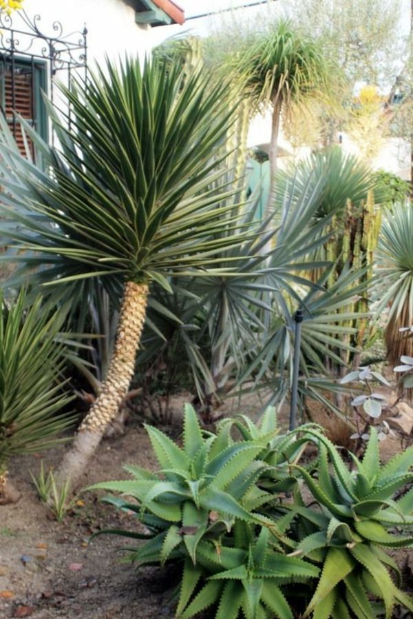 -yucca-plant-garden plants-palms-deco-by-the-garten--